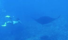nusa lembongan, indonesia, bali, visit bali, asia, manta rays, snorkeling