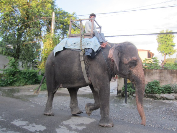 chitwan national park, elephants, nepal, asia