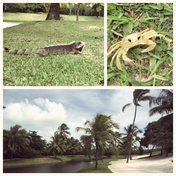 praia do forte, resort tivoli hotel, best resorts in brazil, turtles hotel, crab, iguana, animals in brazil, wildlife, travel, lifestyle, luxury hotel, brazil, best places in south america, beach resort