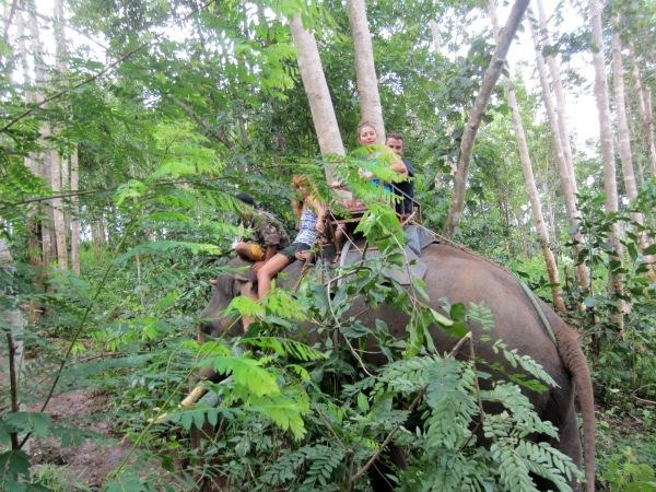 elephant riding, jungle trekking, north of thailand