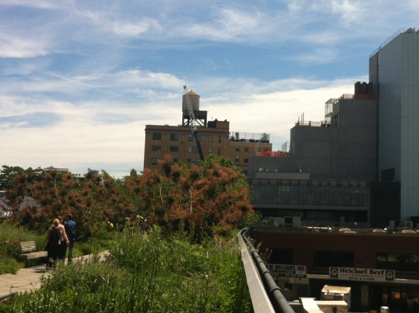 the high line, nyc, new york, usa, coolest cities in the world, summer in new york, best hidden places to visit in ny, where should i go in ny, what to visit in new york